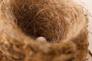 Nest by Furtwangl