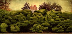 Hedge at Audley End House by Caroline