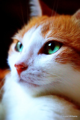 Cat by Iezalel Williams