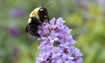 Autumn Bees by DaPuglet