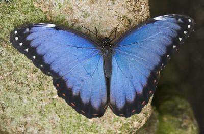Butterfly by Berit Watkin